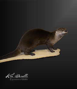 otter wills.png