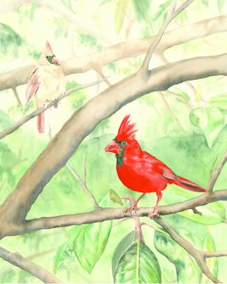 Cardinals in a Magnolia