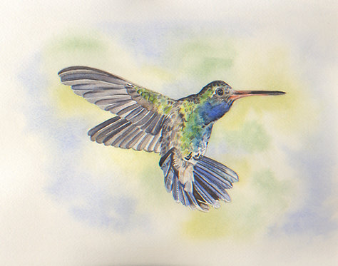 Green Violet Eared Hummingbird