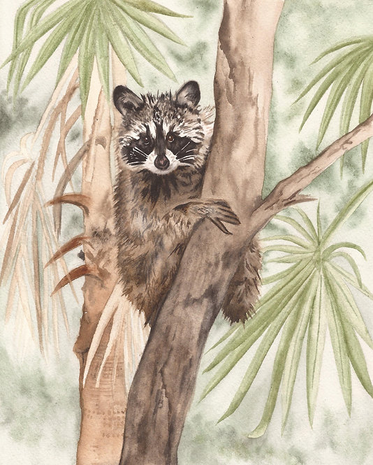 Racoon in a Palm Tree
