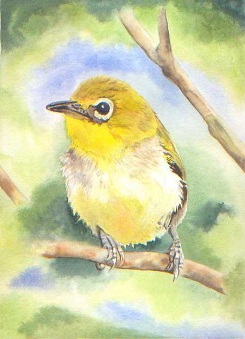 Little yellow finch