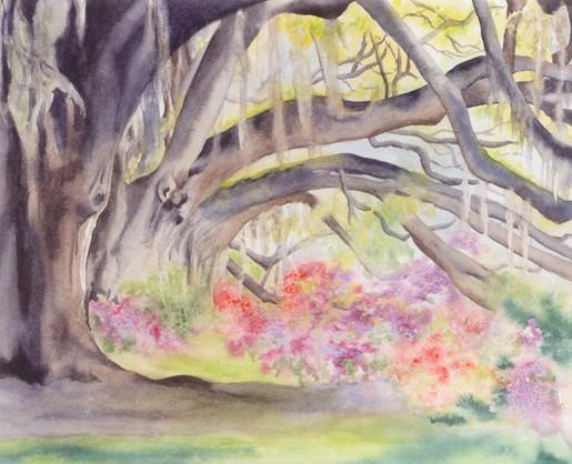 Elaina's Woodland