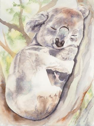 Sweet Koala