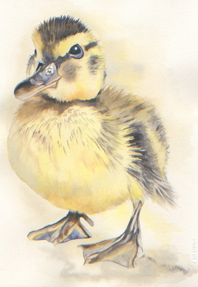 Black and Yellow Duckling