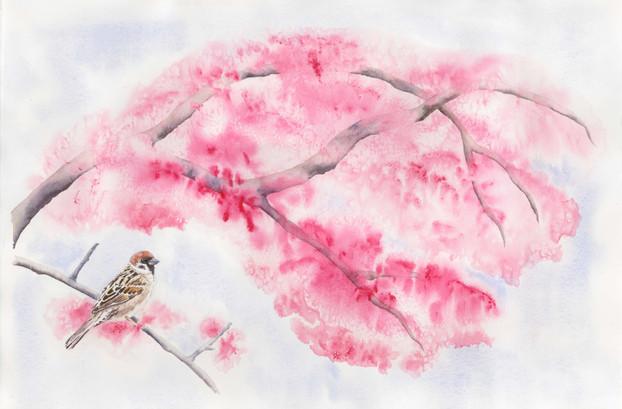 Finch on a Pink Blossum