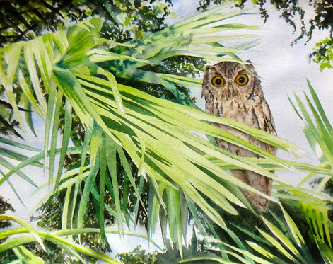 Owl in a Palm Tree