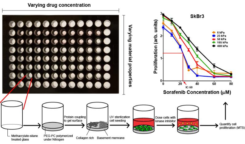 New Drug Screening Platform