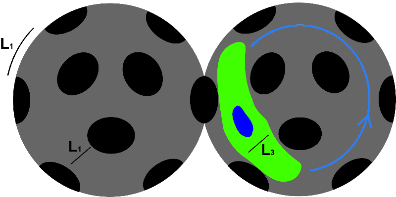 Modeling 3D Cell Motility