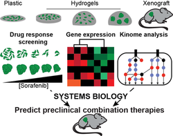 Biomaterials and Systems Biology