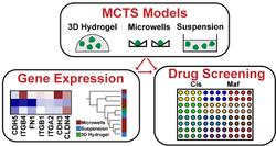 Tumor Spheroids for Drug Screening