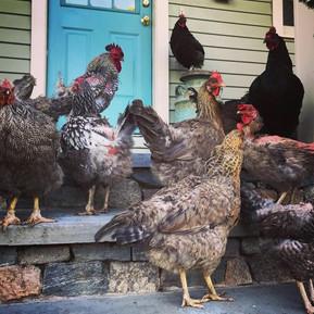 The Porch Gang