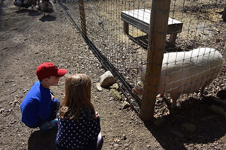 Hazel and visitors.jpg