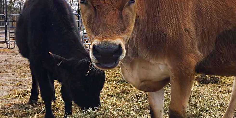 An Introduction to Animal Welfare & Ethics for High Schoolers