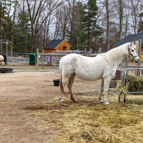 THE HIDDEN WORK OF RESCUE AND SANCTUARY