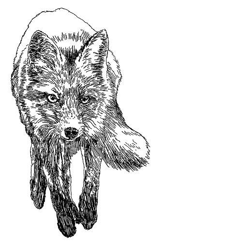 Fox 30 x 30 cm