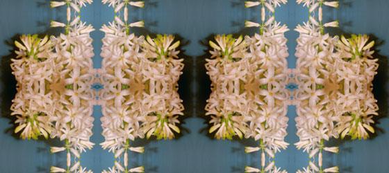 Hyacinthus-03-01