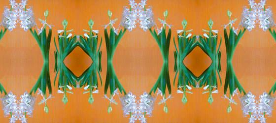 Hyacinthus-11-01