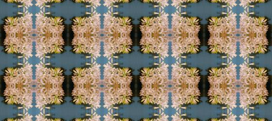 Hyacinthus-04-01
