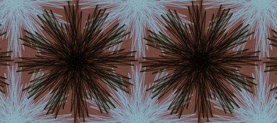 Centaurea-02-01