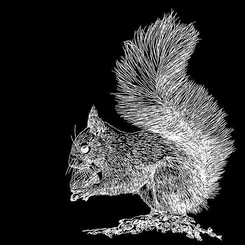 Squirrel IV 30 x 30 cm
