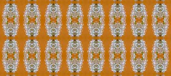 Hyacinthus-06-01