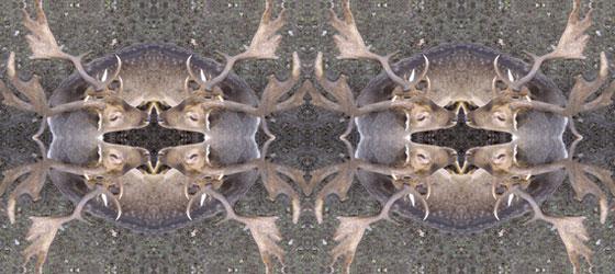Deers-Web-03-01