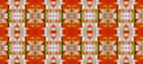 Hyacinthus-16-01