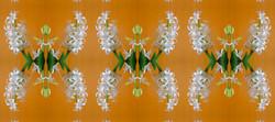 Hyacinthus-09-01