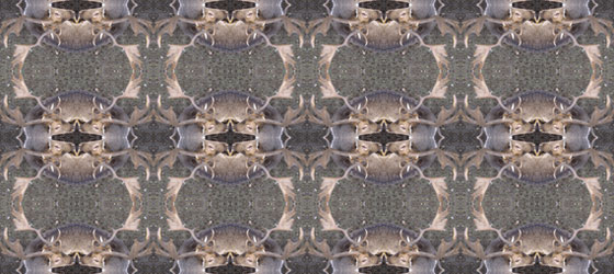 Deers-Web-04-01
