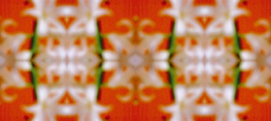 Hyacinthus-15-01
