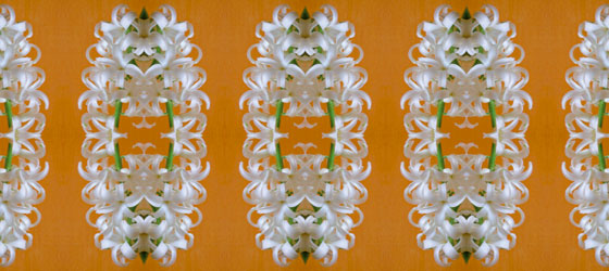 Hyacinthus-05-01