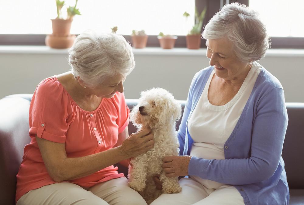 animais de estimação e idosos