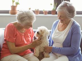 Animais de estimação: a companhia perfeita para idosos