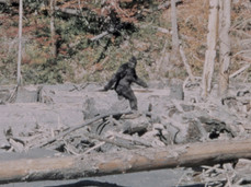 The Mystery of Bigfoot Lives On