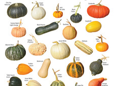 Time to Plant Pumpkins