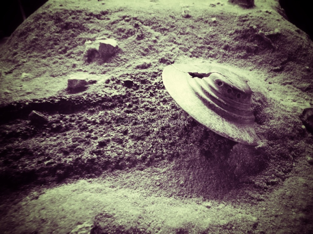 roswell2014_09