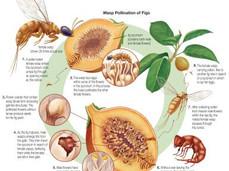 The True Horror of Figs