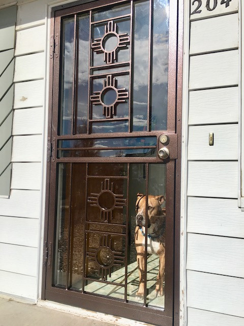 Zuni dog view