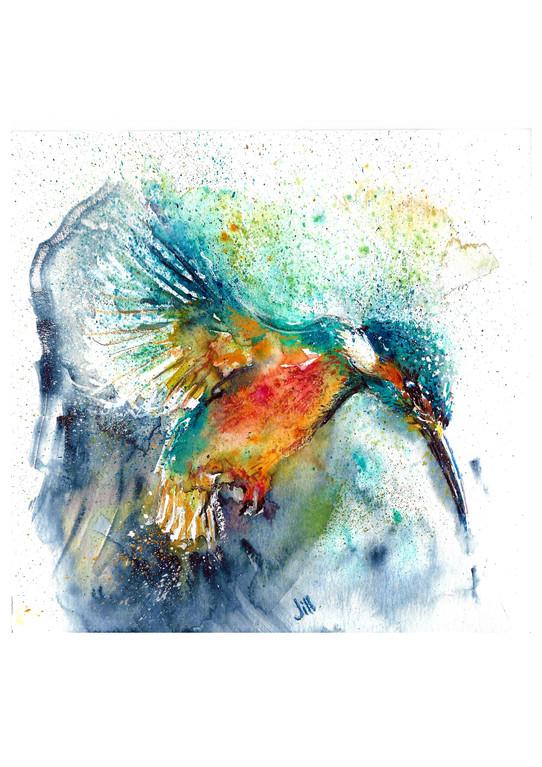 KingfisherForweb.jpg