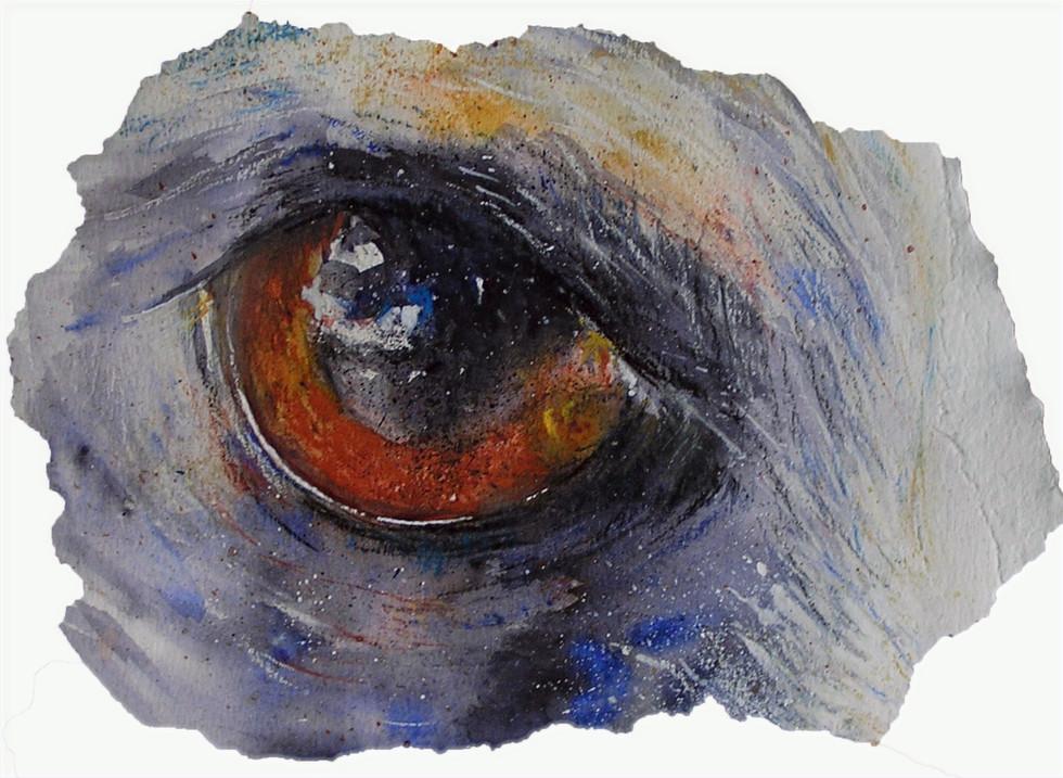 eye close-up, Yoli