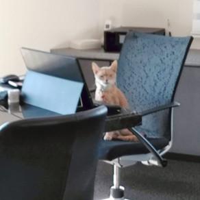 お仕事中ですが、何か?!