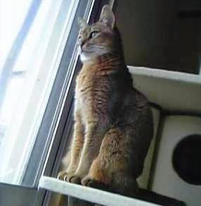 大好きだった愛猫の命日