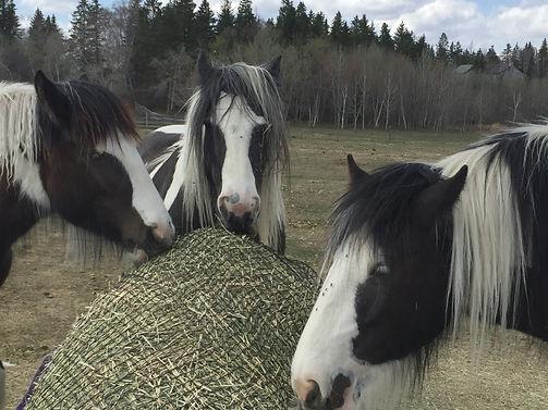 slow feed hay net gypsy