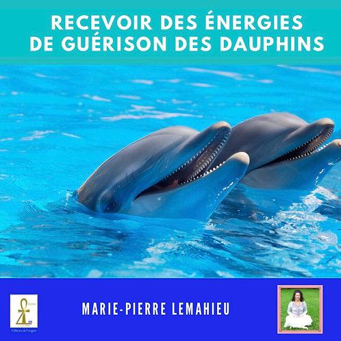Méditation «recevoir les énergies de guérison des dauphins»