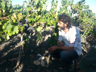 シチリア州アルド・ヴィオラ:来日できなかった~!!なのであらためて記事書きました。