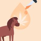 Equine & CBD