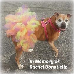 In Memory Of Rachel