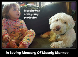 Mosely Monroe