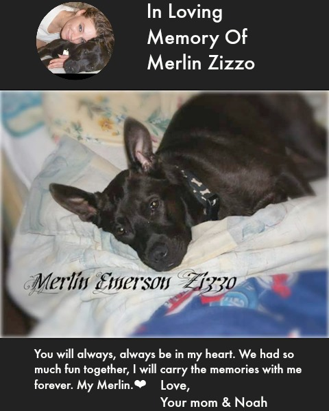 In Loving Memory of Merlin