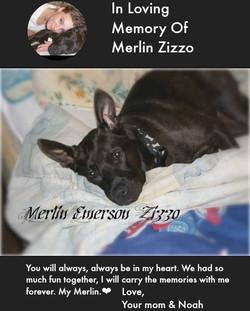 In Loving Memory of Merlin